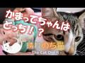 こてつと赤ちゃん、どっちが大変? 6 - Cats and babies -