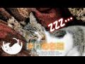 何をされても絶対に起きない猫 13 - A cat sleeping whatever is done -
